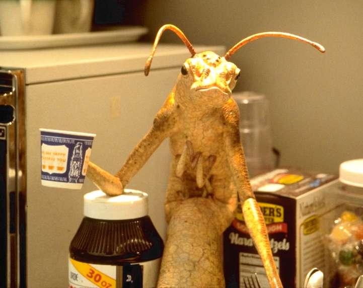 Men In Black Aliens Drinking Coffee Gethin Oliver: woof wo...